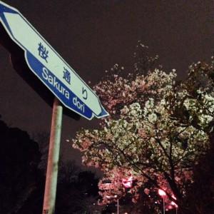 茨木桜祭り2