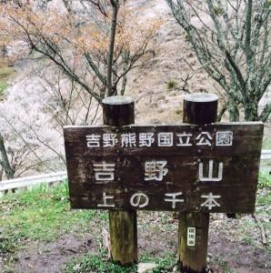 2015桜 吉野千本桜