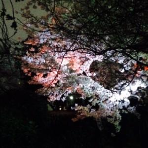 茨木桜祭り1